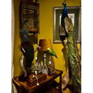 De Wonderkamer Pauw (man) op houten voet