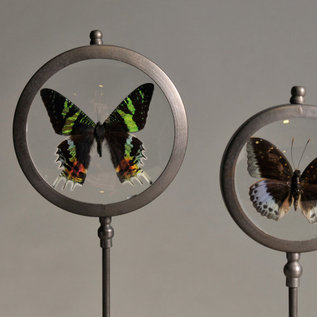 Round Frames on stands with butterflies  (set of 3)