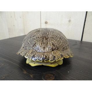 Écaille de tortue
