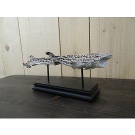 Shark full mount on stand
