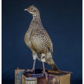 De Wonderkamer Pheasant  (hen)