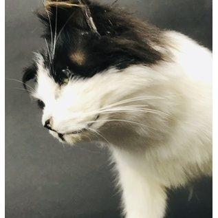 De Wonderkamer Cat on pedestal