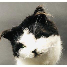 De Wonderkamer Kat op sokkel
