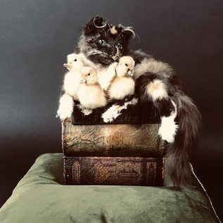 De Wonderkamer Kat op boeken met eendekuikens