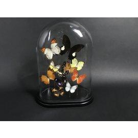 De Wonderkamer Cloche avec différents papillons