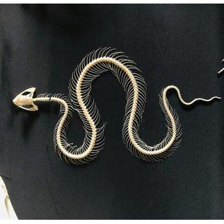 De Wonderkamer Serpentes serpent squelette