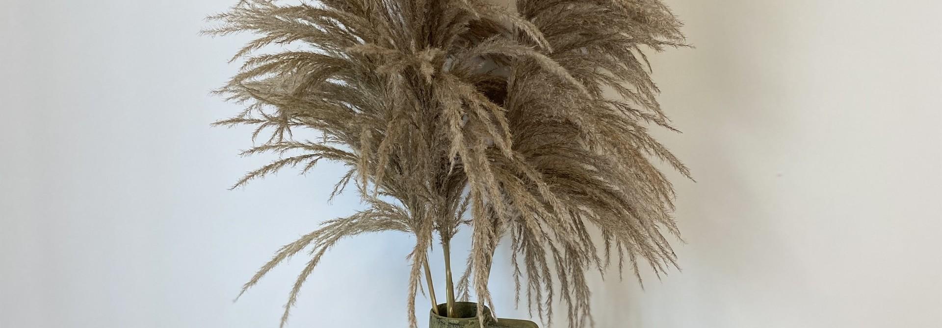 Dried Cortaderia Naturel 110 cm