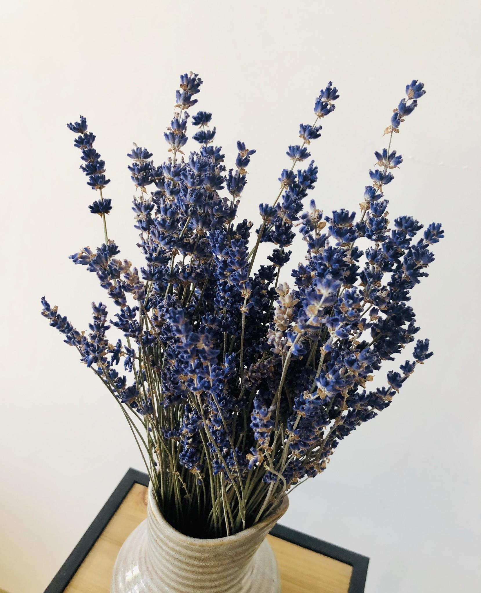 Lavendel - blauw gedroogd-3