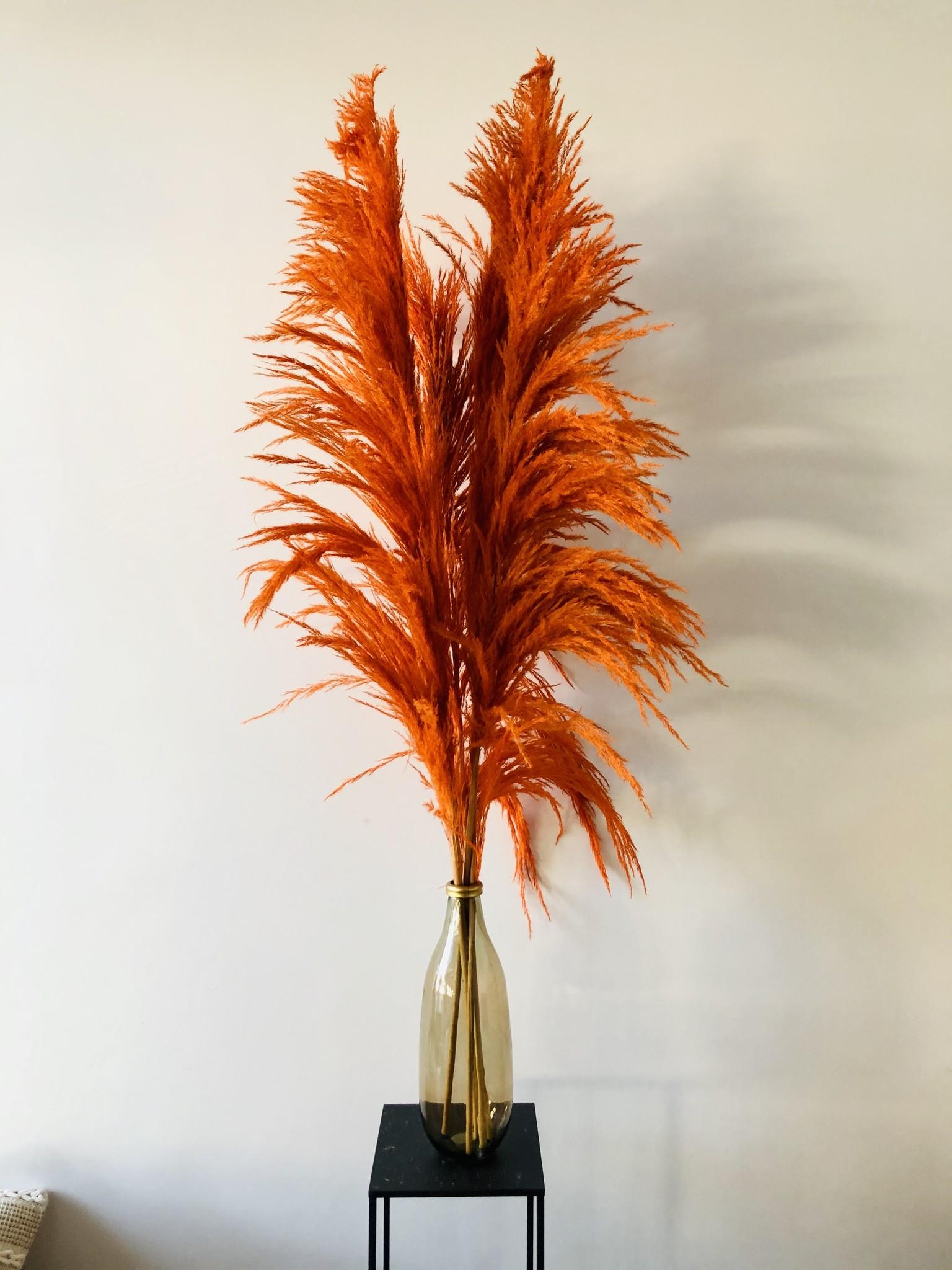 Pampas Cortaderia Oranje-1