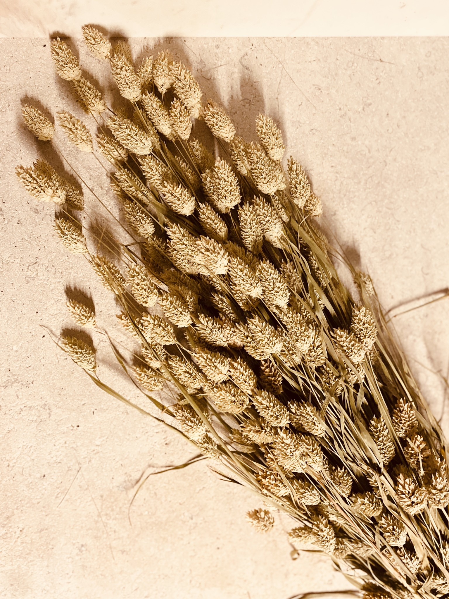 Phalaris gedroogd Natural-1