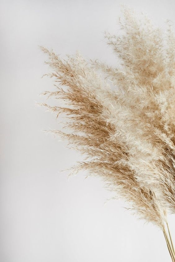 Natural Pampas 115 cm - blond-3