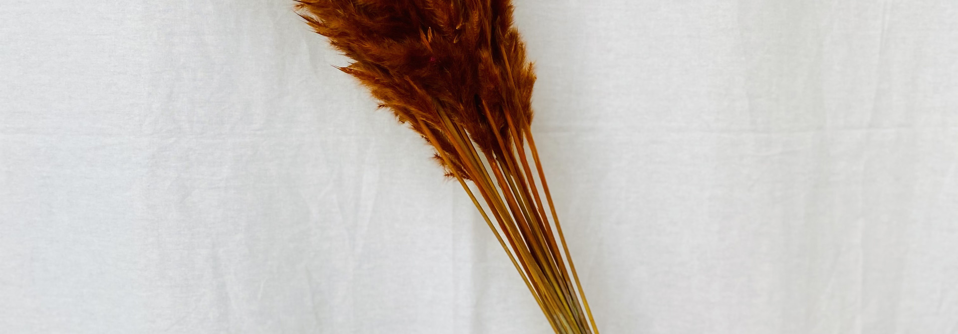 Fluffy Reed - Terracotta