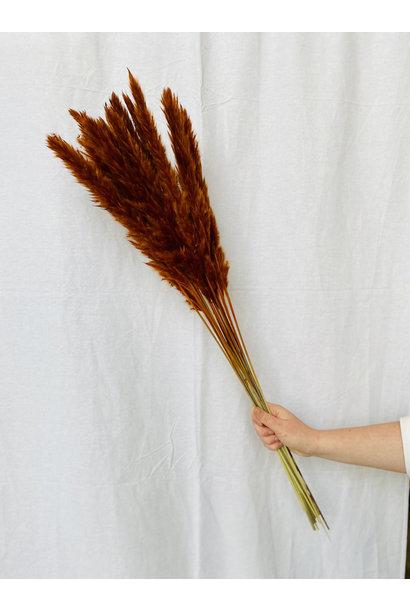 Fluffy Reed - Terracotta