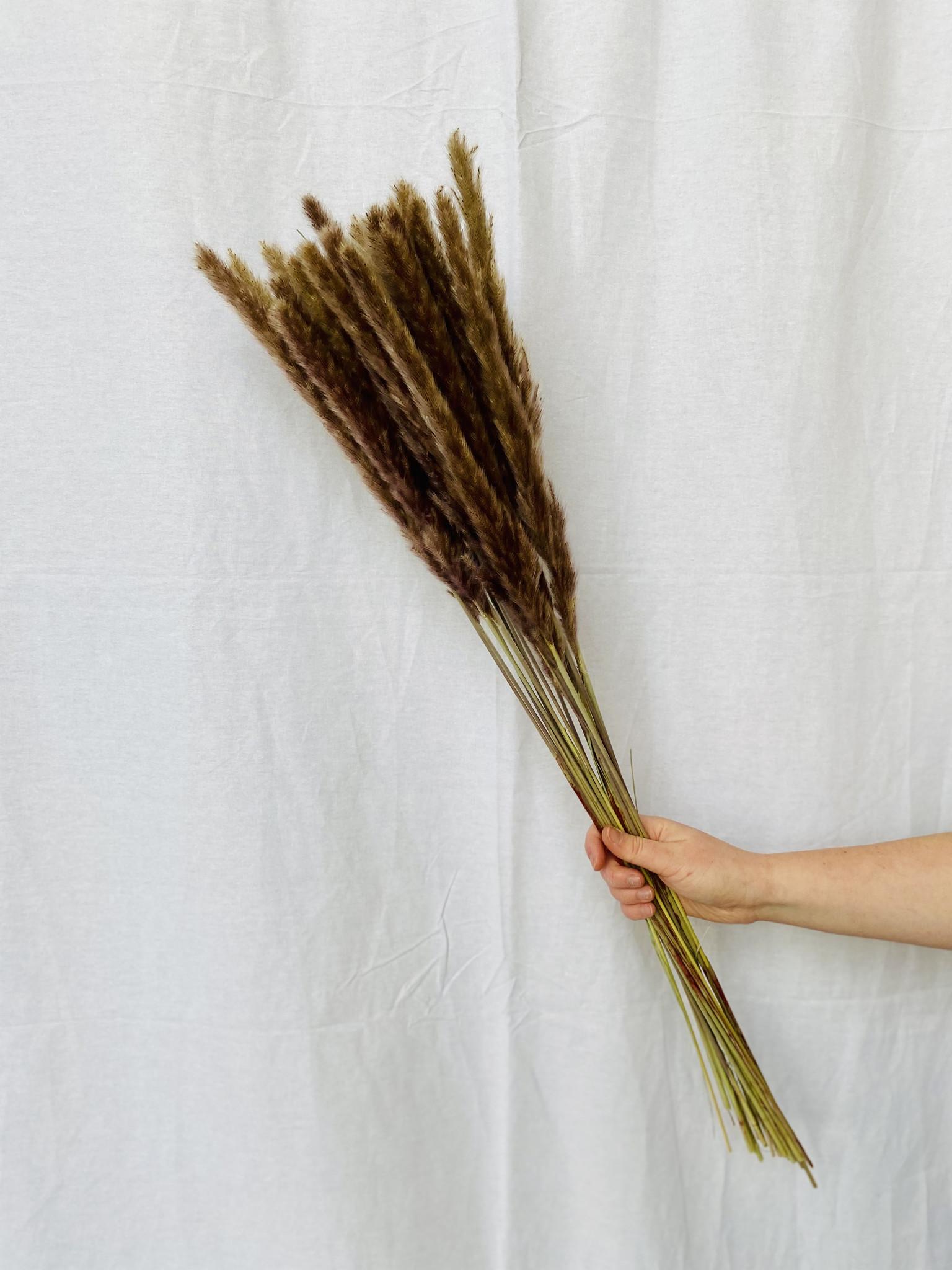 Fluffy Reed - Natural (pennissetum)-2