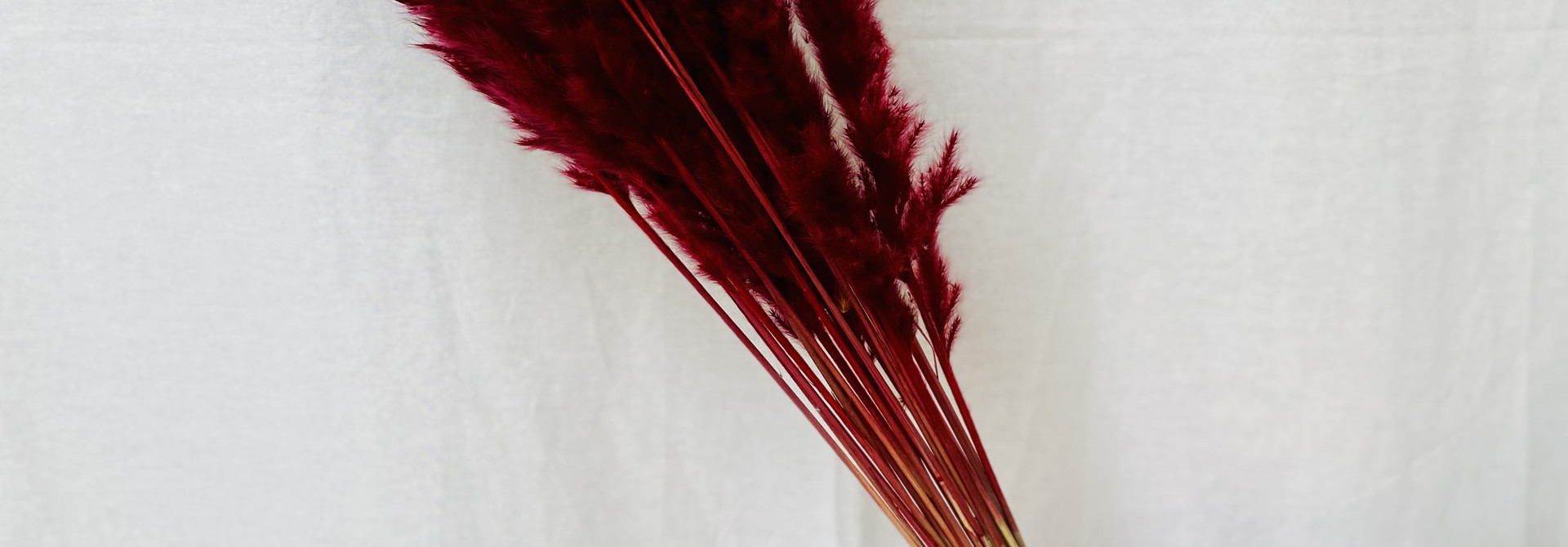 Fluffy Reed - Rood
