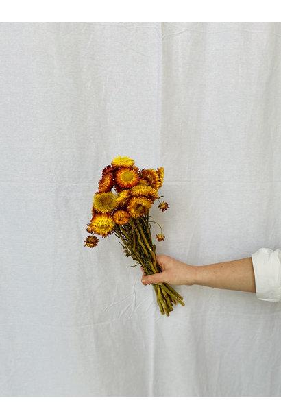 Helichrysum / Strobloemen mix oranje