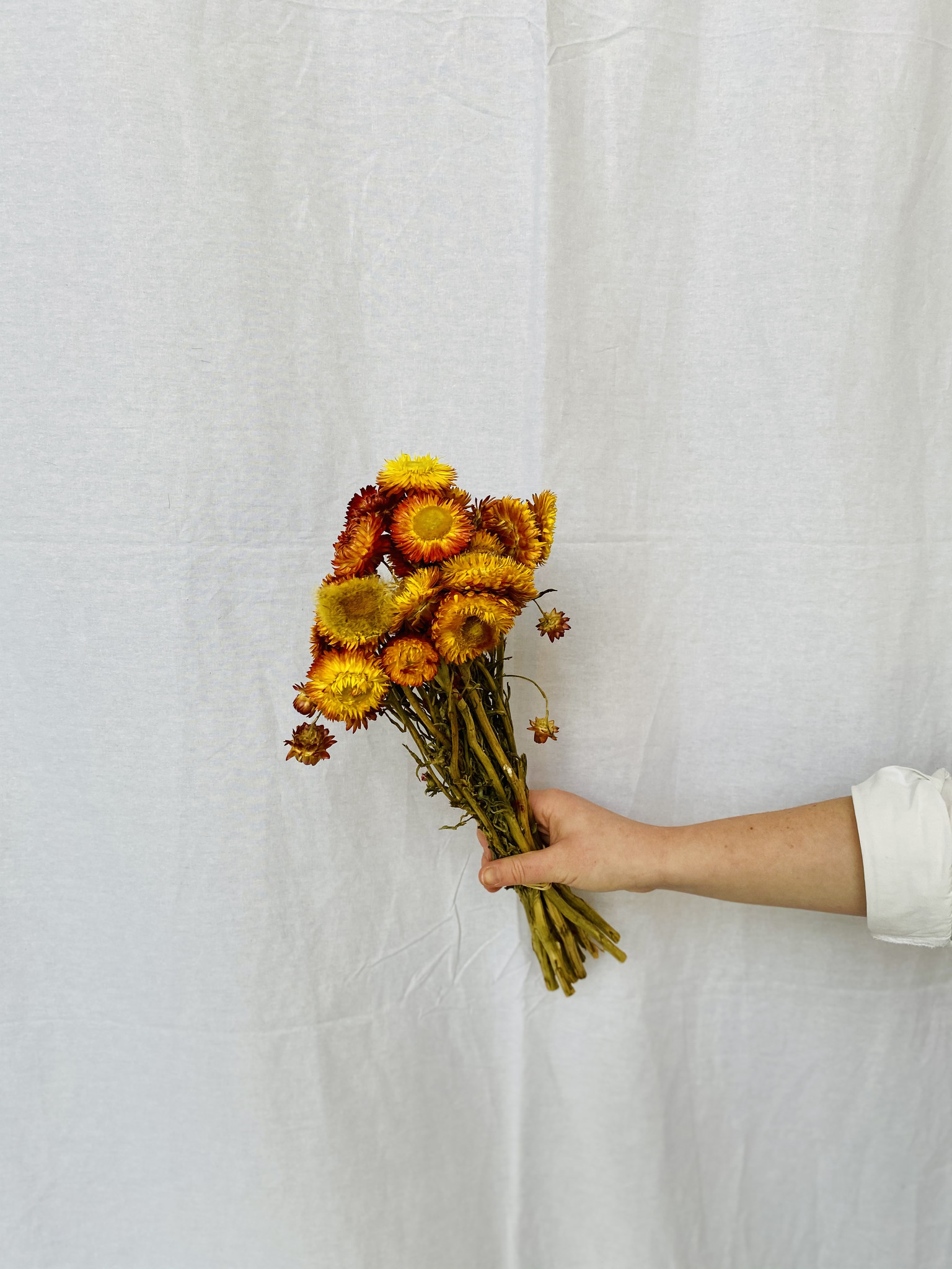 Helichrysum / Strobloemen mix oranje-1