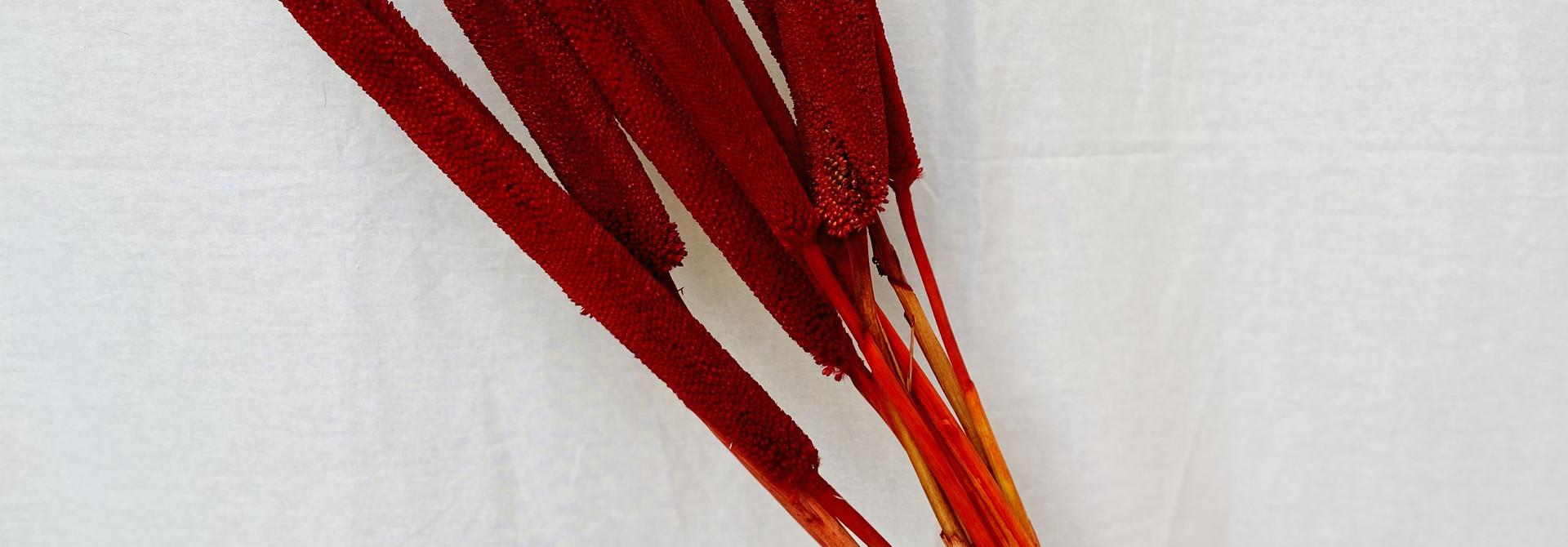 Babala Red - 5 stuks