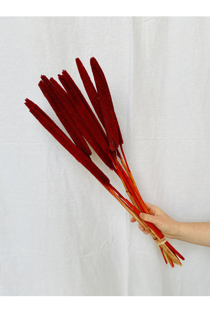 Babala Red