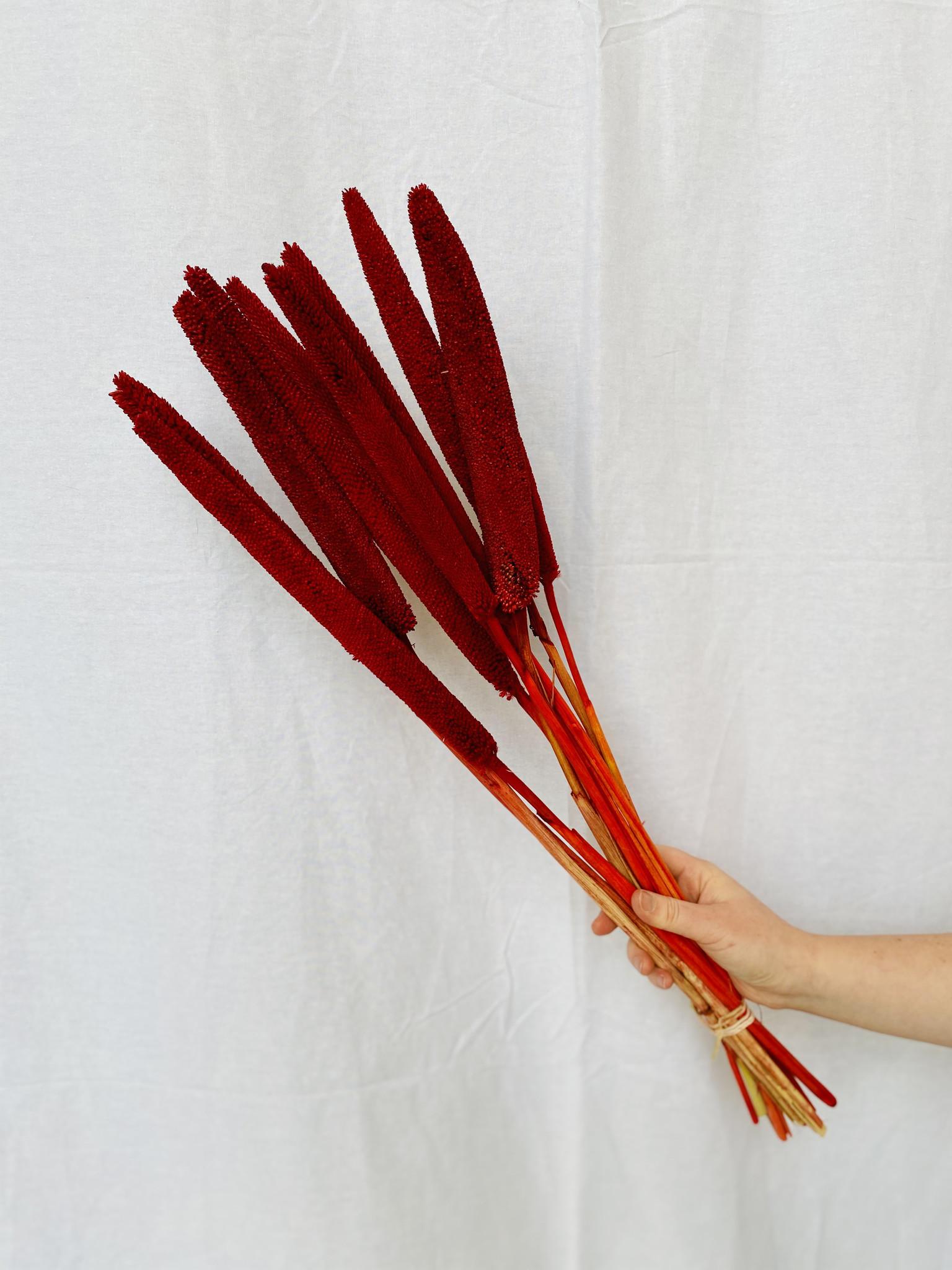 Babala Red - 5 stuks-1