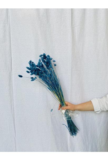 Phalaris gedroogd - Parisian blue