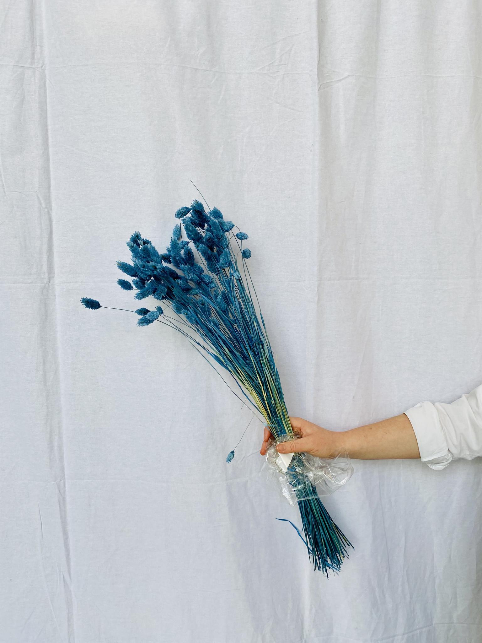Phalaris gedroogd - Parisian blue-1