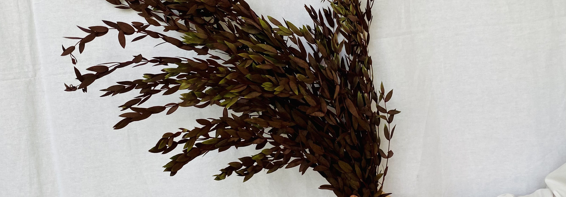 Gepreserveerde Eucalyptus - rood