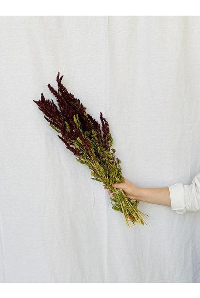 Amaranthus rood