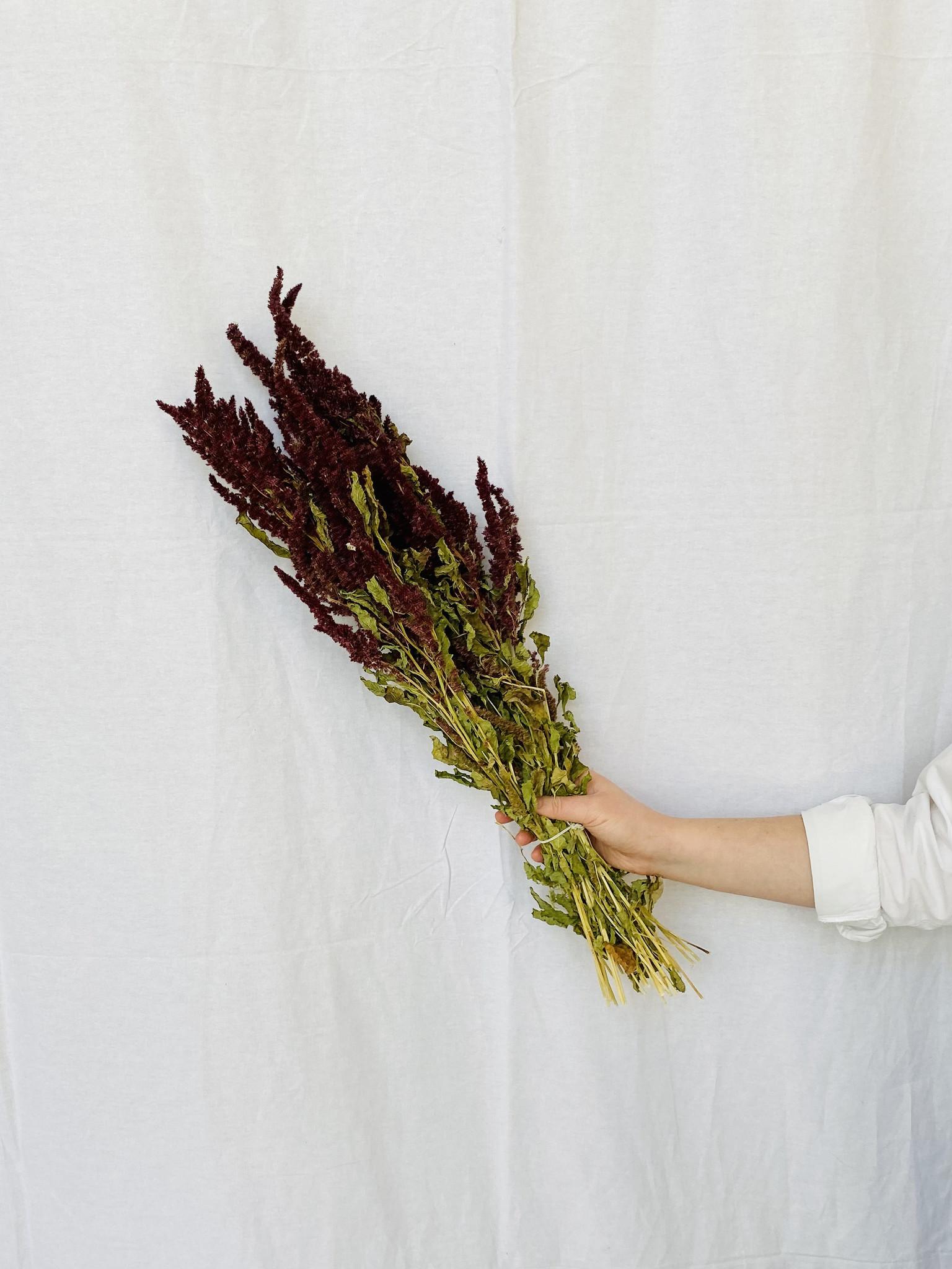 Amaranthus rood-1