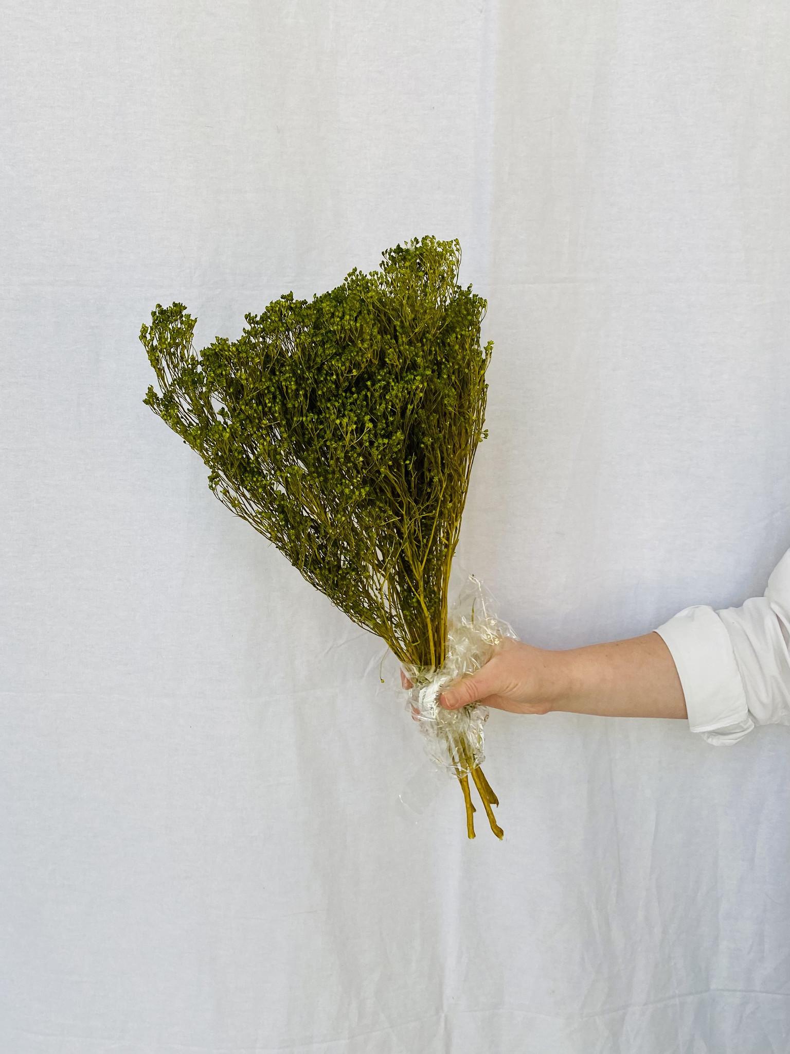 Broom bloom - mosgroen-1