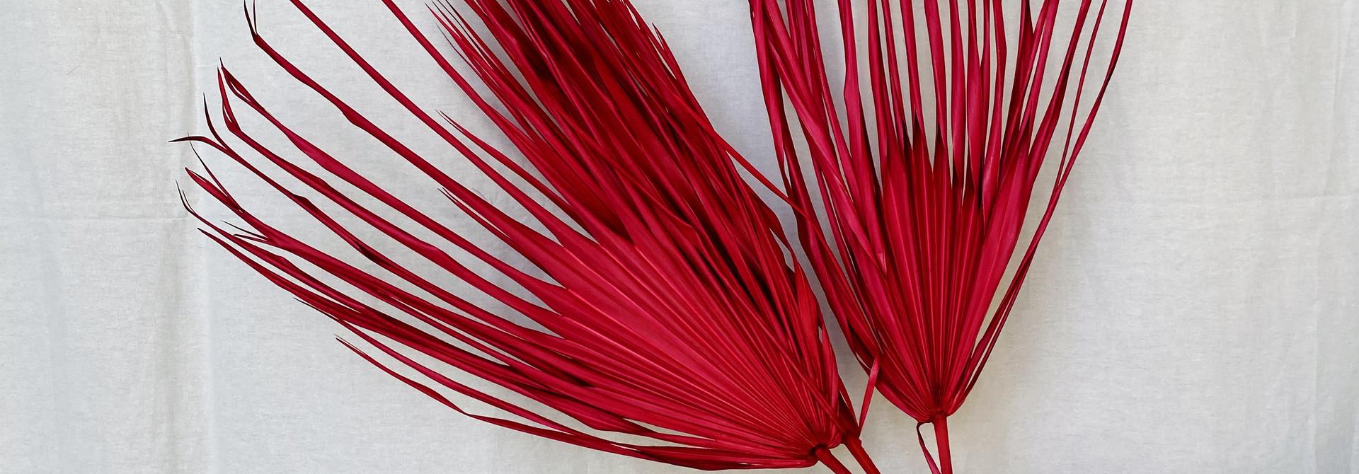 Gedroogd Palmblad - Cerise