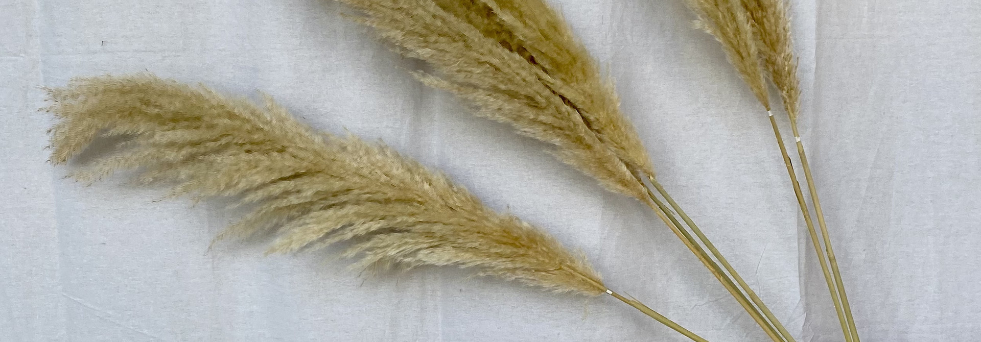 Natural Pampas 115 cm - blond