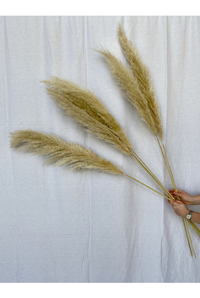 Natural Pampas - blond