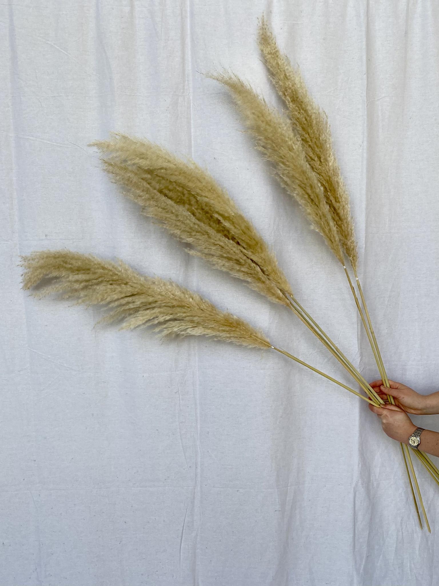 Natural Pampas 115 cm - blond-1