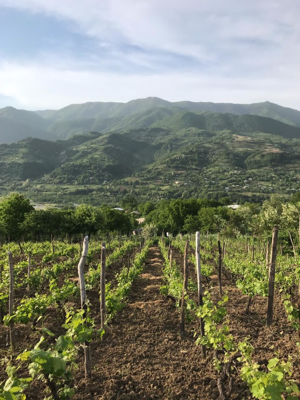 AMBRA Khvanchkara AMBRA Semi-Sweet red wine 2019