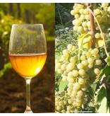 Merk  8millennium  Mtsvane 8millennium, Amber droge wijn [bio-dynamisch]