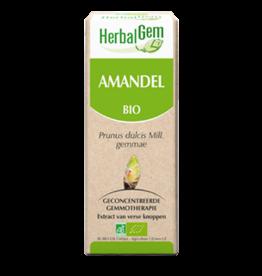 Gemmotherapie Amandel 15ml