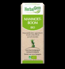 Gemmotherapie Mammoetboom 15ml