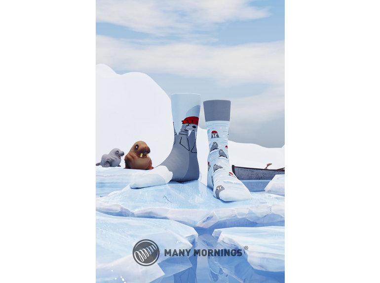 Many Mornings The Walrus by Many Mornings