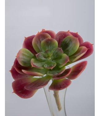 # Succulent 14 cm