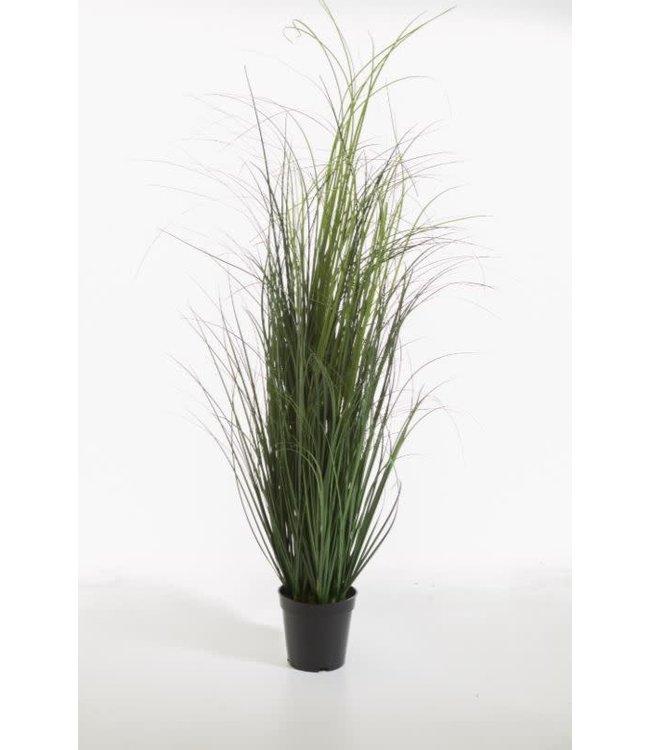 ( Curly Grass in pot 110 cm - wordt niet verzonden/alleen afhalen