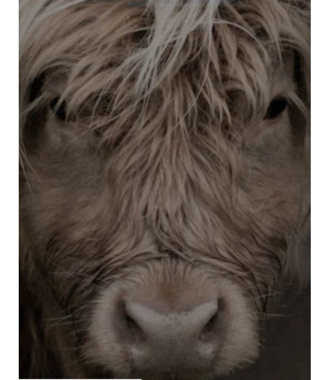 # Tuinposter - hooglander blond - stevig weerbestendig dubbelzijdig pvc gecoat doek - 82 x 112 cm