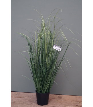 *Curly Grass in Pot 64 cm