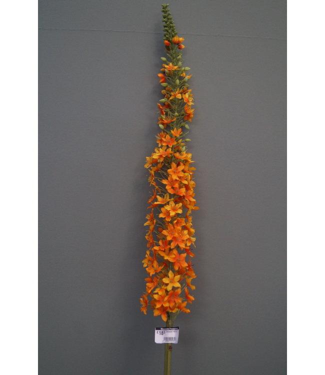 # Eremerus 140 cm