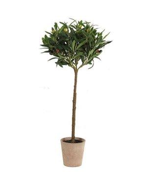 *Olijfboom - kunst - Olea europaea groen - L45B45H75CM