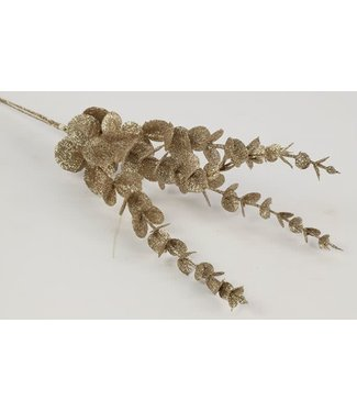 *Eucalyptus champagne - 15 x 15 x 45 cm