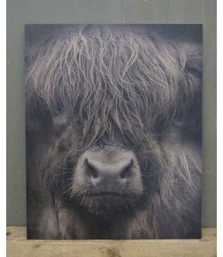 *W884 - Schilderspaneel - Schotse hooglander - 45 x 54 x 1 cm