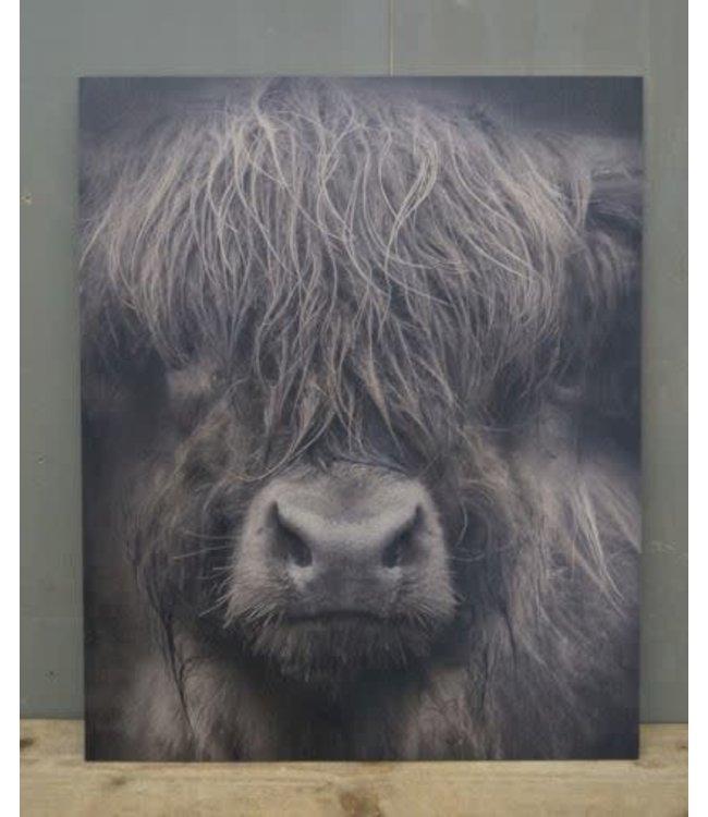# W884 - Schilderspaneel - Schotse hooglander - 45 x 54 x 1 cm