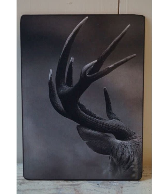 # J151 - Afbeelding gewei - op hardboard - 19 x 14 cm