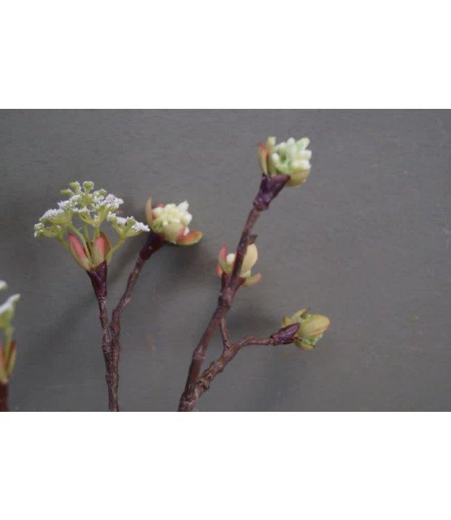 # Q985 - Esdoorn fruit tak Quince S wit - l55b12,5h2,5cm